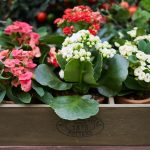 How Can You Make your Garden More Sustainable